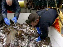 Trawlermen sort through fish