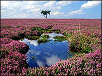 Egton Moor, North York Moors National Park