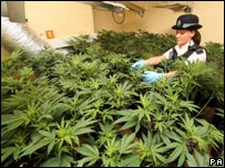 Policewoman in cannabis factory