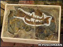 Claw fossil (Markus Poschmann)