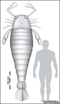 El escorpión marino junto a un hombre