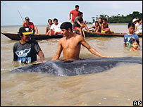 Local with the whale in Tapajos River near Piquiatuba, Brazil (16/11/2007)