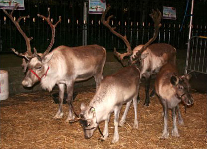 These Cairngorm reindeer were spotted outside of the St David's Centre in Cardiff (Christine Lewis).