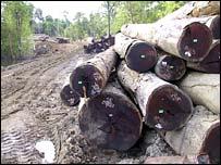Deforestaci�n (Imagen: EIA/Telapak)