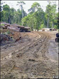 Logging (Image: EIA/Telapak)