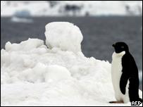 Ping�ino en la Ant�rtica
