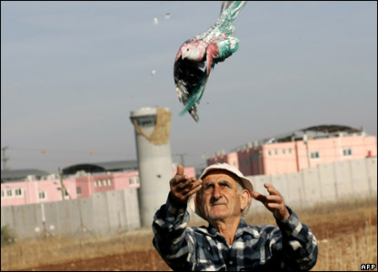 A man releases a dove painted in the Palestinian national colours