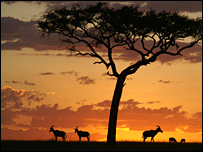 Topi antelope silhouette (Jakob Bro-Jorgensen)
