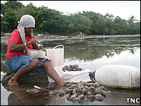 Woman cleaning shellfish (Image: TNC)