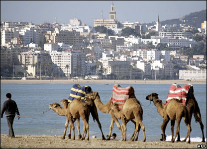 Camels in Tangiers