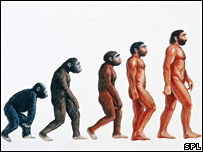 Evolution of man illustration (Science photo library)