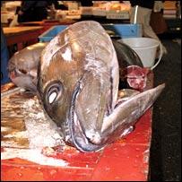 Tuna. Image: BBC