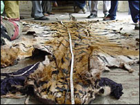 Tiger skin recovered in Uttar Pradesh on December 4 2007