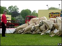 Palomino horses at Zippo's Circus