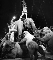 Performing elephants in 1962 broadcast