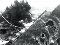 Diver Tony Groom