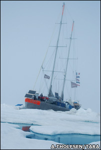 Tara in ice (A.Tholfsen/www.taraexpeditions.org)
