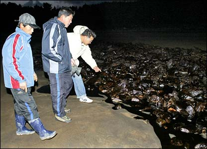 Local residents survey beach at Taean