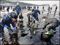 Emergency workers shovelling oil on beach in Taean
