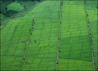 An aerial view of fertile fields in northern Kenya(Photo by BBC News website reader Angela Sacha)
