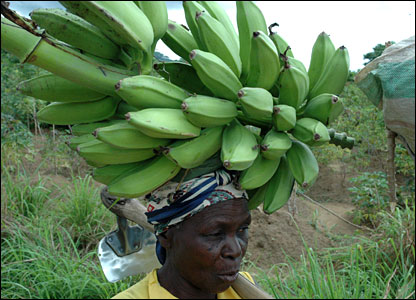 A woman farmer with a bunch of bananas on her head and a hoe over her shoulder in Malawi (Photo by BBC News website reader Rick Wadley)