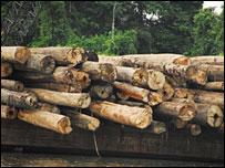Logs (Picture credit: Gabriel Eickhoff)