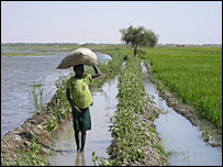 A rice paddy near Timbuktu