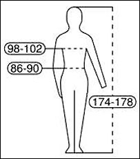 Diagram showing new bust, weight and height measurements