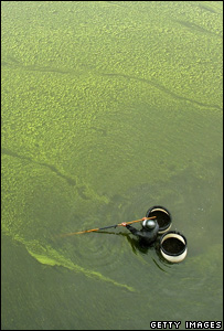 Algal bloom (Getty Images)