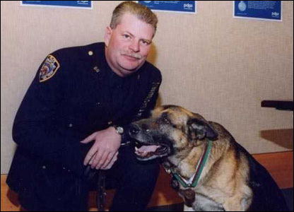 Appollo, an NYPD dog. Picture courtesy of PDSA