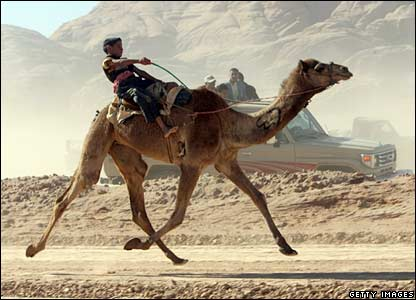 A camel race in Jordan
