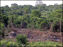 Deforestation in Uganda