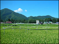 An experimental rice field in Japan (Photo: National Institute of Agro-environmental Sciences)