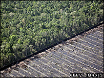 Deforested land (Getty Images)