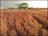 Wheat farming in the US
