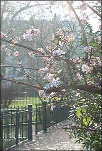 Jardines de Kensington (Foto: Rebeca González)