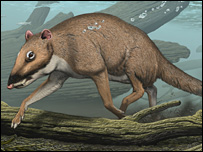Indohyus. Artist's reconstruction by Carl Buell/Neoucum