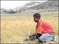 Boy working in a field in Tigray