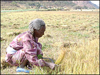 Woman working in a field in Tigray