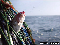 Fish in nets off Scottish coast