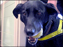 A drug sniffer dog