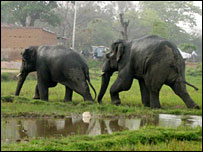Maraudin elephants in Jharkhand state