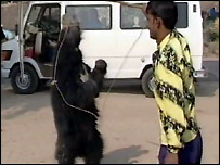 Dancing bear in India