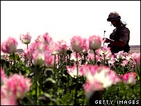 Soldier in Helmand poppy field