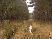 Kilnhill wood
