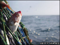 Fish poking out of a fishing net at sea