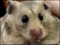 A hamster - generic