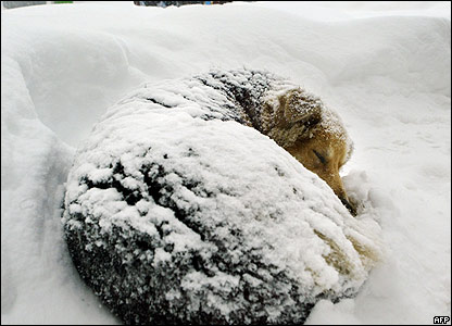 A dog in the snow in Bucharest
