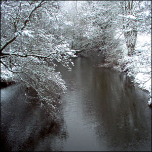 Snow covered trees over a river
