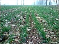 Wheat field in Henan province